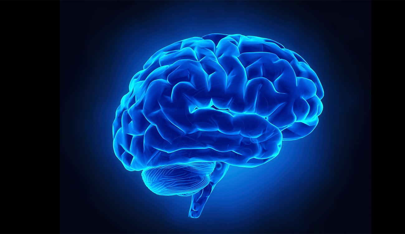 10 Fascinating Brain Facts