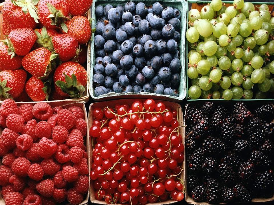 Berries Battle Parkinson's